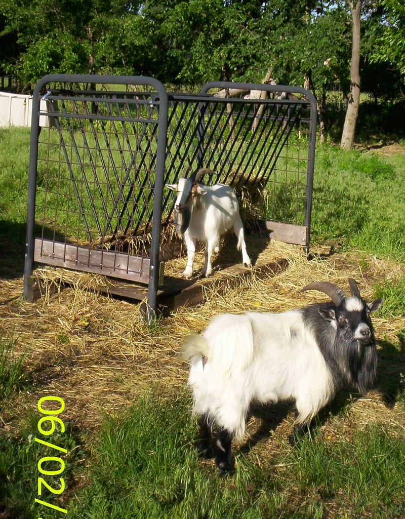 Homemade Hay Feeders for Goats | Goats and their feeders ...